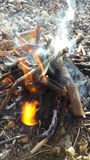 Burning. Fire Royalty Free Stock Photo