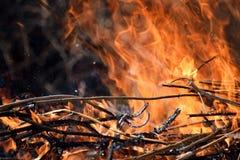 Burning Fire Firefighting Danger Nature Wood Background Stock Photo. Burning Fire Firefighting Danger Nature Wood Abstract Background Insurance Stock Photo stock image