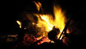 Burning fire with firewood. At night stock video footage