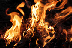 Burning fire flame Royalty Free Stock Photos
