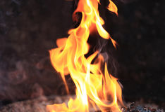 Burning fire flames Stock Image