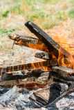 Burning fire in flames and embers preparing for barbecue on the grass land.  Royalty Free Stock Photos