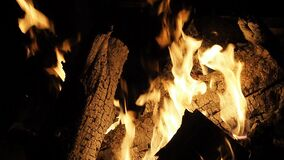 Burning Fire in natural fireplace in SLOW MOTION HD VIDEO. Branches of conifer tree burns in wild flames