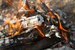 Burning fire from saxaul Royalty Free Stock Photo