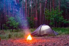 Bonfire near a tent in a pine forest royalty free stock images
