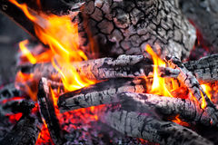 Burning in the fire tree Royalty Free Stock Photos
