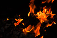 Burning fire wood Stock Images
