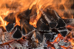 Burning fire wood. The fire on the wood, charred wood, ash Stock Image