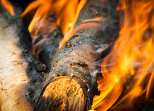 Burning fire. Wood and ember Stock Photos