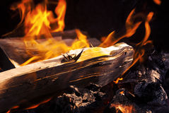 Burning Fire With Wood Stock Image
