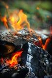 Burning firewood Royalty Free Stock Photo
