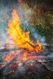 Burning firewood in big bonfire Stock Photo