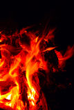 Burning firewood. Camp fire in the night Royalty Free Stock Photography