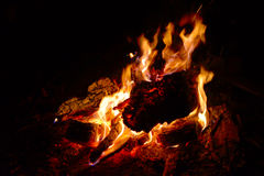 Burning firewood. Camp fire in the night Royalty Free Stock Photos