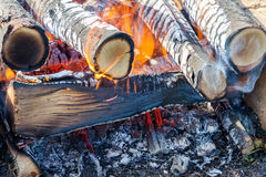 Burning firewood in campfire Stock Images