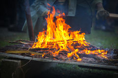 Burning firewood at campfire. Royalty Free Stock Photo