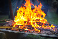 Burning firewood at campfire. Stock Image