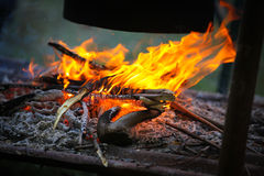 Burning firewood at campfire. Stock Photography