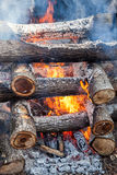 Burning firewood in the fire Stock Image