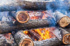 Burning firewood in the fire Stock Images