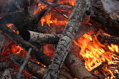 Burning firewoods Stock Image