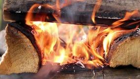 Burning firewoods closeup stock video footage