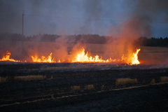 Burning Flame Field of dry straw Royalty Free Stock Photos