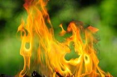 Burning Flames Stock Image