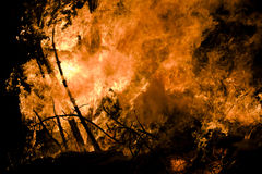 Burning forest Royalty Free Stock Photos