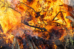 Burning forest bushes. Close up of a forest fire burning bushes royalty free stock photography