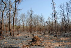 Burning Forest. S in Southeast Asia Stock Images