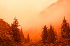 Burning forest Stock Images