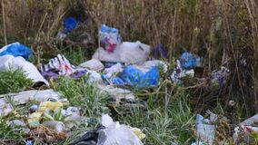 Burning garbage dump, ecological pollution