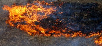 Burning grass. The big space on fire, close up Royalty Free Stock Photos