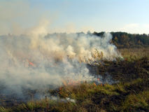 Burning grass. Royalty Free Stock Images