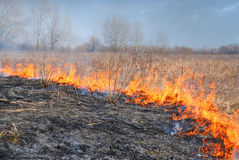 Burning grass. Burning dry grass on the field Stock Photos