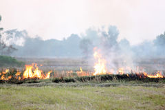 Burning the grass after harvest. Royalty Free Stock Photo