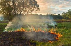 Burning grass Stock Images