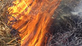 Burning grass red fire in the background.  stock footage
