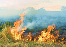 Burning grass Royalty Free Stock Image