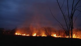 Burning grass and trees at dusk. Forest fire, Wildfire burning tree and dry grass at twilight in the forest at dusk stock footage