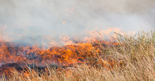 Burning Grass or Veld Royalty Free Stock Images