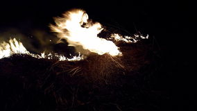 Burning grass. stock footage