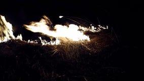 Burning grass. stock footage