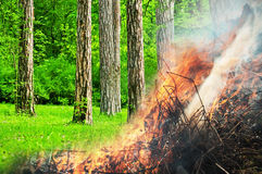 Burning green forest Royalty Free Stock Image