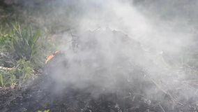 Burning heap of an old leaves stock footage