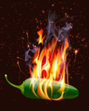 Burning Hot Jelapeno Pepper. On dark background Royalty Free Stock Photo