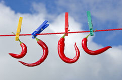 Burning hot  pepper chili on clothes rope Royalty Free Stock Photo