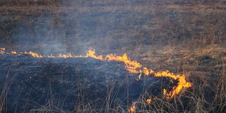 Burning land. Fire burn dry grass to ash Royalty Free Stock Images