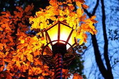 Burning lantern in autumn evening. With golden leaves, natural background Stock Photo